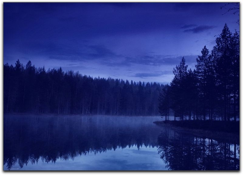 Forest and Lake at Night