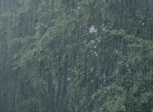 Rain among trees