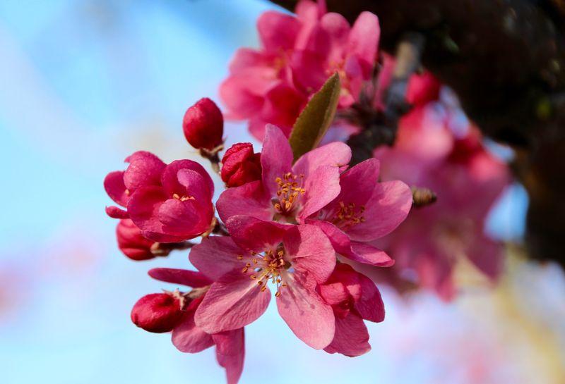SpringBlossom1
