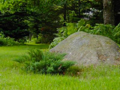 Juniper and granite