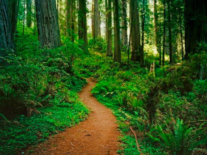 Redwods path