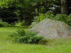 Juniper_and_granite